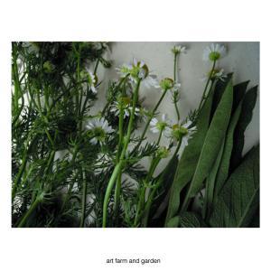 カモミール/art farm & garden