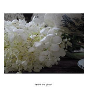夏の、梅雨の紫陽花/art farm & garden