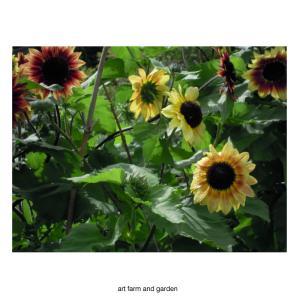 夏/art farm & gardenの庭