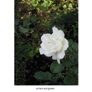 そして冬へと向かう植物達/art farm & gardenの庭