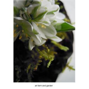 バランサエの花/art farm & garden