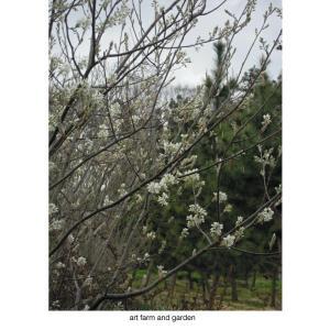 april /art farm & gardenの庭
