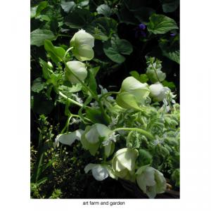 籠の中の花/art farm & gardenの庭