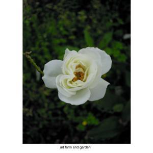 薔薇 roses/art farm & garden