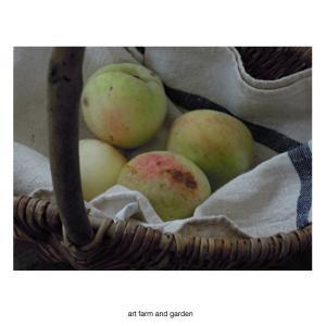 桃の収穫/art farm & garden