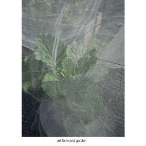 9月の庭/art farm & garden