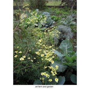 ウィンターコスモス/art farm & gardenの庭