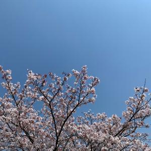 風に舞う花びら