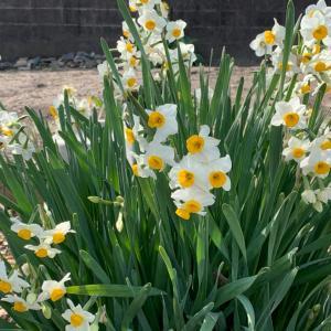 春が来た!?