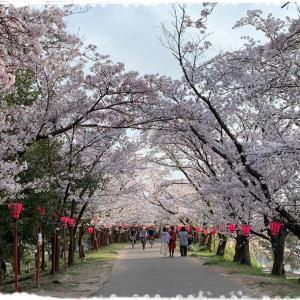 桜、そして楽しかった5日間♪