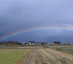 時雨に虹・・北風に冬桜