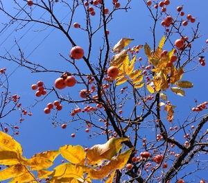見上げる冬木立・・・空