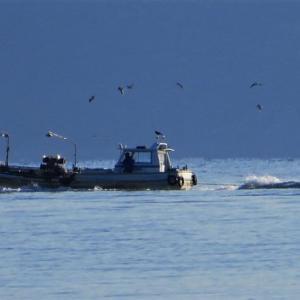 琵琶湖の漁・・春往来近し