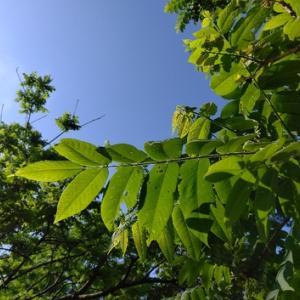 朝の緑の晴れ