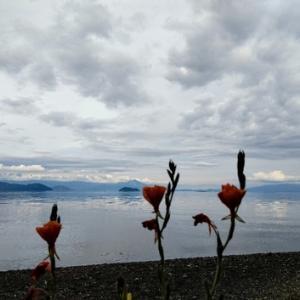 琵琶湖岸も解放・・・六月初日