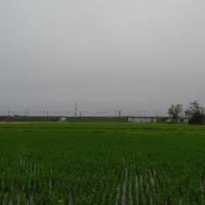 小雨~金曜日の朝