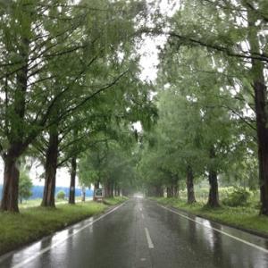 日曜日も雨模様の朝