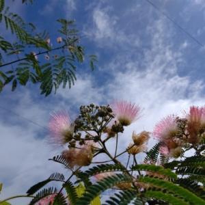 湿度が高く~合歓の花