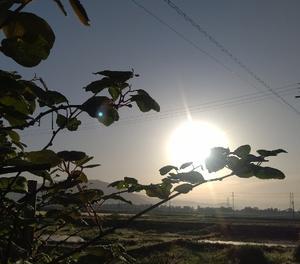 連休明け~快晴の朝