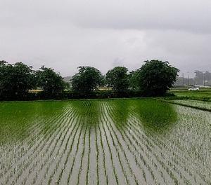 梅雨~金曜日