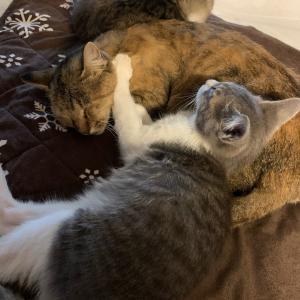 朝の癒しは猫の寝顔から