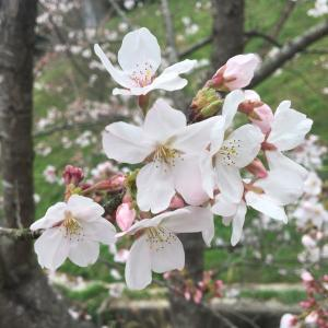 今日は春分の日