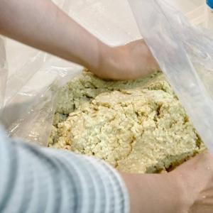 スーパーフード・モリンガを使って発酵食品を作ろう!
