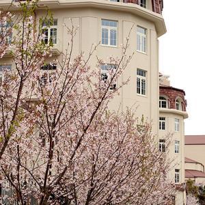 花のみちの桜は満開です