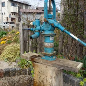 久々に井戸水を汲みました