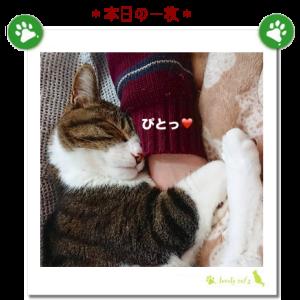 猫と休日モード♪