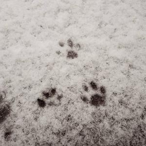 雪〜〜〜〜〜〜積もってます( ̄□ ̄;)!!