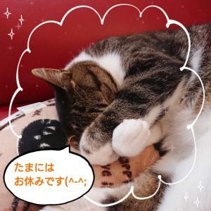 週末~ひとやすみ