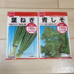 【ダイソー】葉ねぎと青しその種を購入