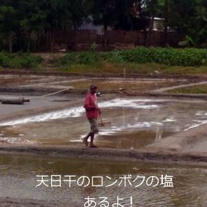 乾季限定 東ロンボクの塩田