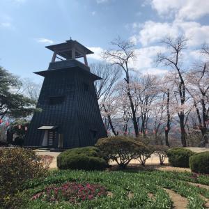沼田城址公園の今日の桜