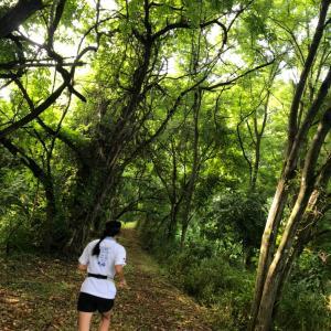 沼田公園ジャングルコース