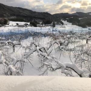 恵みの雪!!