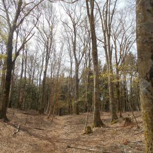 静寂の森にて