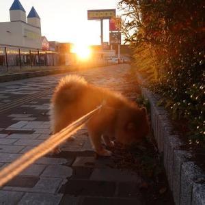 夕焼け散歩
