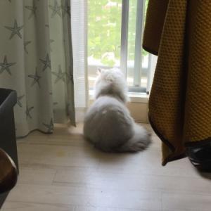 メグちゃんの窓辺