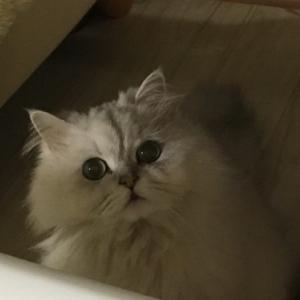 お目目キラキラ、メグちゃん。
