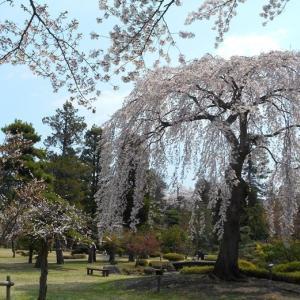 2020年4月の藤田記念庭園茶会 中止のお知らせ