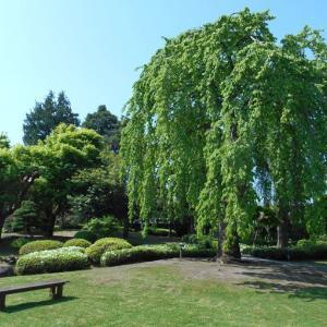 2020年5月の藤田記念庭園茶会 開催のお知らせ