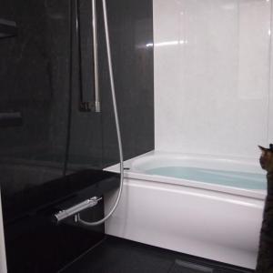 フルモデルチェンジしたお風呂でハーレム