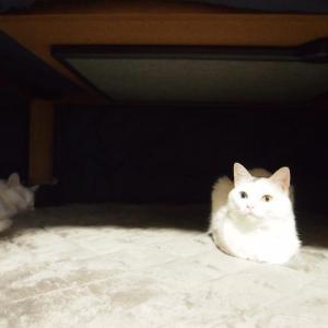 ネコとコタツ
