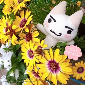 お庭に咲いてる植物 #ぬいぐるみ #ぬい撮り #井上トロ 088