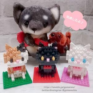 キッズブロック ねこさん完成 #ブロック #おもちゃ #ぬい撮り