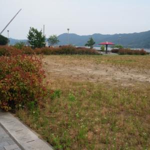 【キャンプ下見】 早川公園(愛媛県今治市)