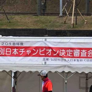 特別日本チャンピオン決定審査会