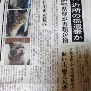 腹立たしい  猫の遺棄事件